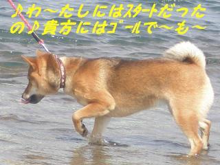 Umi1_3