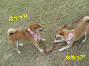 Chikohime