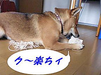 Itomaki21